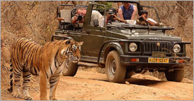 Explore India with Tiger (13 days) | North India Holidays | Tailor Made Tours | India Tours, Travels Packages, Plans, North, India, Holidays, Tailor Made, Tours, Travels, Packages, Plans